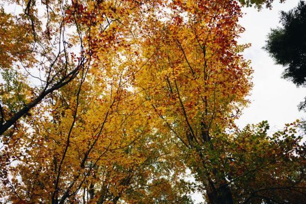 Fotograf slubny sesja zdjeciowa plener slubny w lesie natura fotografia slubna